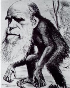 Darwinian Monkey-Man, 1871