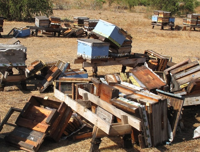 Beehives in Chile - shaken and stirred after the 2010 earthquake.