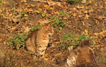 Cama Cat (CCO via Pixabay)