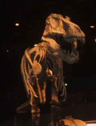 T-rex at the T-rel Museum, Drumheller, Alberta
