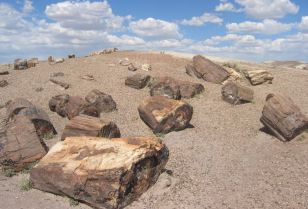 Arizona's Petrified Logs