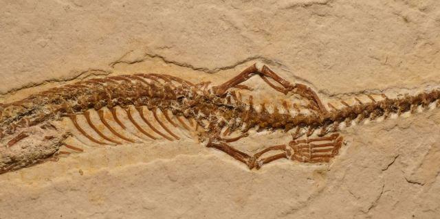 fossil snake rear legs