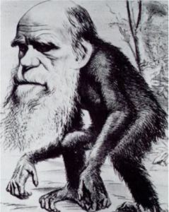 Ridiculing Darwin, Hornet magazine 1871