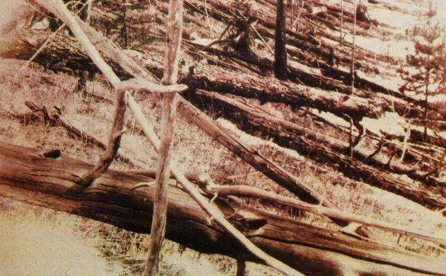 Kulik's 1929 photo of Tunguska